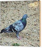 Pigeon Toed Wood Print
