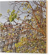 Pigeon Tree At The Taj Wood Print