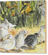 Pigeons In Benidorm Wood Print