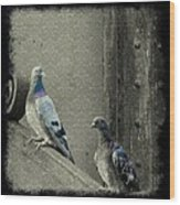 Pigeons In Damask Wood Print