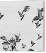 Pigeons In Flight Wood Print