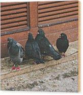 Pigeons Wood Print