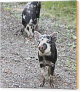 Piglets On The Loose Wood Print