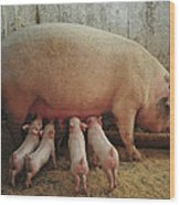 Momma Pig And Piglets Wood Print by Terry DeLuco