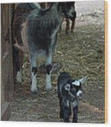 Pigmy Goats Wood Print