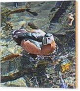 Pigmy Goose Wood Print
