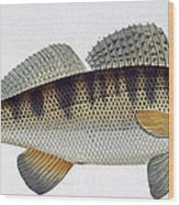 Pike Perch Wood Print
