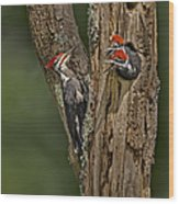 Pilated Woodpecker Family Wood Print by Susan Candelario