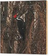Pileated In Winter Wood Print