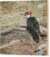 Pileated Woodpecker Forest Floor Wood Print