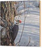 Pileated Woodpecker Winter Wood Print
