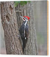 Pileated Woodpecker Foraging Wood Print