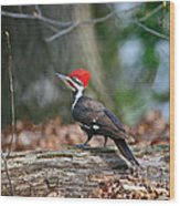 Pileated Woodpecker On Log Wood Print