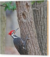 Pileated Woodpecker On Tree Wood Print