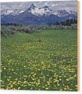1a9210-pilot Peak And Wildflowers Wood Print