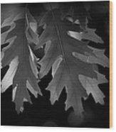 Pin Oak Leaves Wood Print
