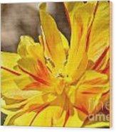 Pin Striped Tulip Wood Print