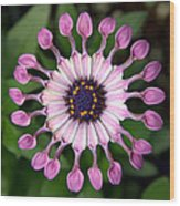 Pin Wheel Wood Print