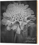 Pincushion Bw Wood Print