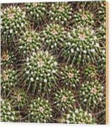 Pincushion Cactus Wood Print