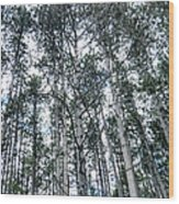 Pine Abstract Wood Print