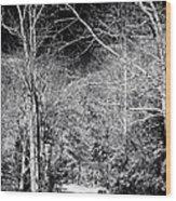 Pine Barrens Path Wood Print by John Rizzuto