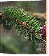 Pine Blossom Wood Print