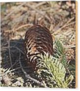 Pine Cone And Small Branch Wood Print