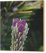 Pine Cone Buds Wood Print