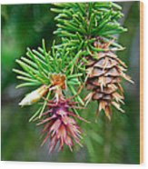 Pine Cone Stages Wood Print