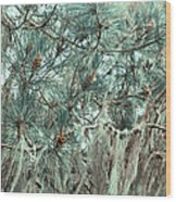 Pine Cones And Lace Lichen Wood Print