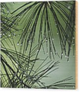 Pine Droplets Wood Print