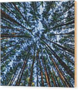Pine Explosion Wood Print