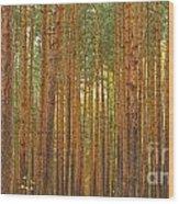 Pine Forest Lienewitz Germany Wood Print