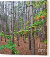 Pine Forest With Autumn Color Wood Print
