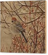 Pine Grosbeak Wood Print by Tammy  Taylor