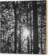 Pine Grove I Wood Print