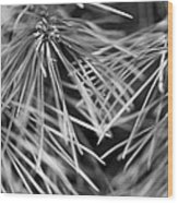 Pine Needle Abstract Wood Print