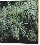 Pine Needles In Ice Wood Print by Betty LaRue