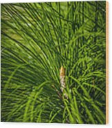 Pine Needles Wood Print