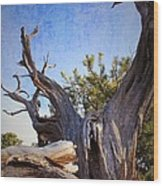 Pine Relic Wood Print