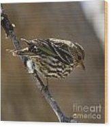 Pine Siskin Wood Print