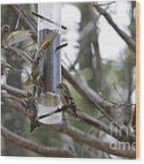 Pine Siskins In Flight Wood Print
