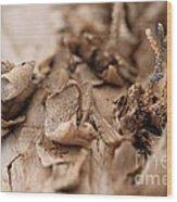 Pine Sprig Wood Print