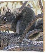 Pine Squirrel Wood Print