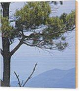 Pine Tree Along The Blue Ridge Parkway Wood Print