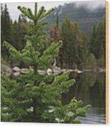 Pine Tree And Rain Drops Wood Print