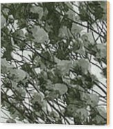 Pine Tree Branches Covered With Snow Wood Print