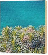 Pine Tree Branches With Turquoise Sea Background Wood Print