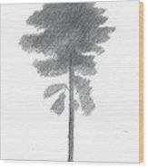 Pine Tree Drawing Number Four Wood Print by Alan Daysh